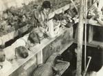 1930 observing alligator in greenhouse