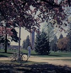 A color photo of bikes and blossoms