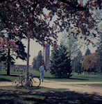 A color photo of bikes and blossoms 2, setting 10