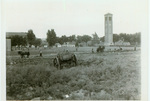 Leveling ground with horses in the late 1920s