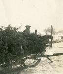 Gyp on the sled